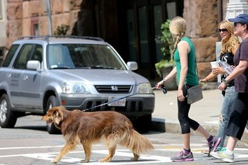 Amanda Seyfried Amanda Seyfried Walks Her Dog