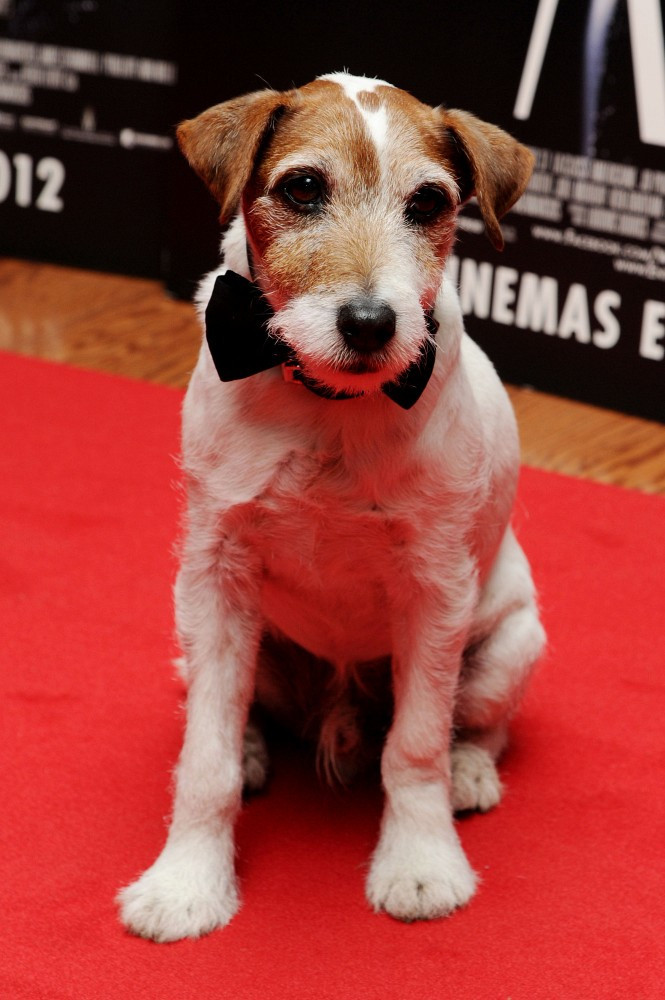 Uggie The Dog On The Red Carpet Zimbio
