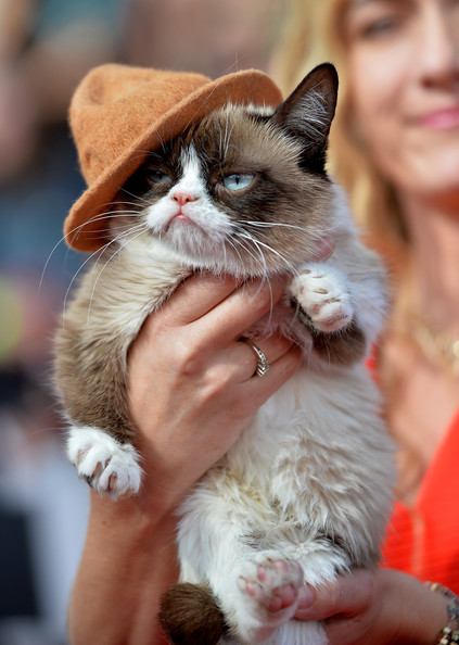 Grumpy cat in arrivals at the mtv movie awards part 2 zimbio arrivals at the mtv movie awards part 2 thecheapjerseys Choice Image