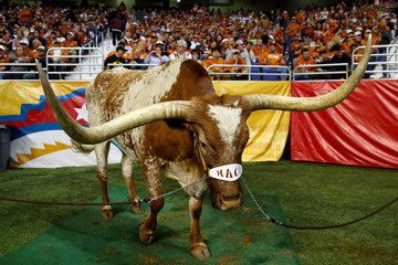 Bevo Oregon v Texas