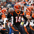 Andy Dalton Picture