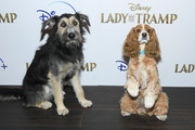 "Monte and Rose attend as Cinema Society hosts a special screening of Disney+'s ""Lady And The Tramp"" at iPic Theater on October 22, 2019 in New York City."