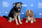 Lady and Tramp D23 Disney+ Showcase at Anaheim Convention Center on August 23, 2019 in Anaheim, California.