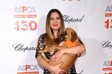 Drew Barrymore ASPCA Hosts 19th Annual Bergh Ball Honoring Drew Barrymore, Hosted By Nathan Lane With Music By Mark Ronson - Arrivals