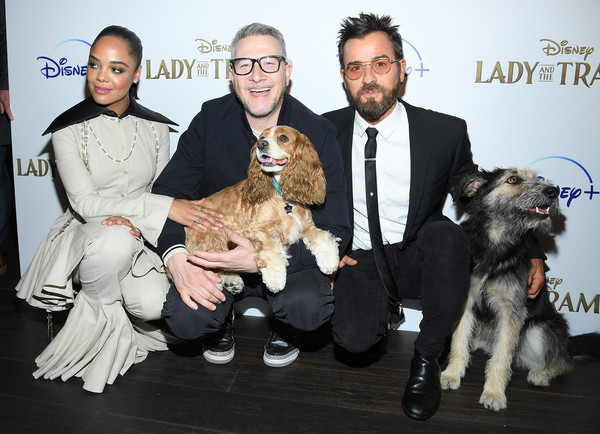 """Cinema Society Hosts Special Screening Of Disney+'s """"Lady And The Tramp"""" - Red Carpet [lady and the tramp,dog,canidae,dog breed,miniature schnauzer,conformation show,companion dog,carnivore,fur,terrier,sporting group,monte,justin theroux,charlie bean,tessa thompson,rose,screening,ipic theater,cinema society hosts special screening of disney,red carpet]"""