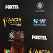 Phoenix 6th AACTA Awards Presented by Foxtel | Red Carpet Arrivals