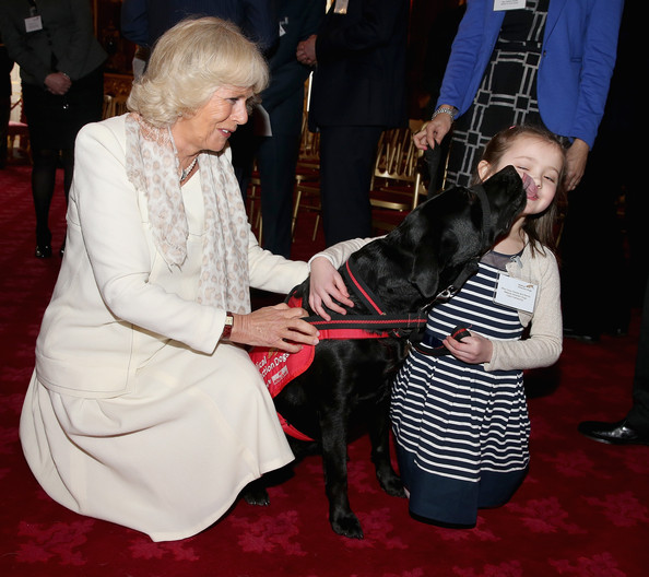 Camilla, Duchess of Cornwall laughs as 6 year old Cerys Davies (who has type 1 diabetes) is licked by her detection dog Wendy at St James's Palace on March 11, 2014 in London, England.