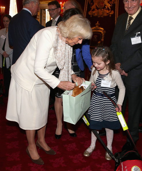 Camilla, Duchess of Cornwall presents 6 year old Cerys Davies (who has type 1 diabetes) with a toy corgi at a Medical Detection Dog Reception at St James's Palace on March 11, 2014 in London, England.