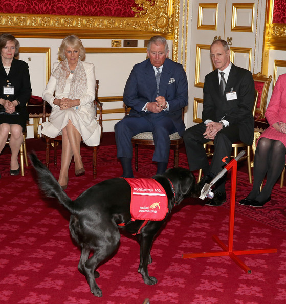 Prince Charles, Prince of Wales and Camilla, Duchess of Cornwall watch a demonstration by Medical Detection Dogs at St James's Palace on March 11, 2014 in London, England.
