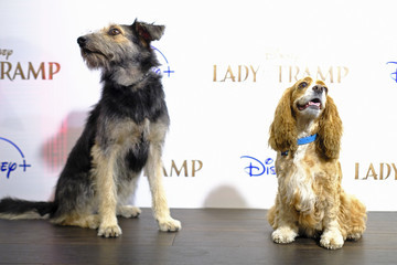 "Rose Cinema Society Hosts Special Screening Of Disney+'s ""Lady And The Tramp"" - Red Carpet"