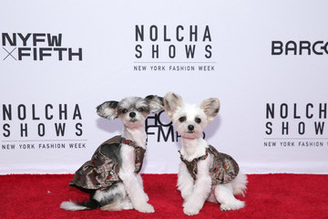 Tinkerbelle the Dog Nolcha Shows NYFW S/S 2022 - Designer  KOREANO Spring Summer2022 Presented By InstaSleep Mint Melts