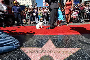 Uggie Uggie Immortalized With Hand And Footprint Ceremony