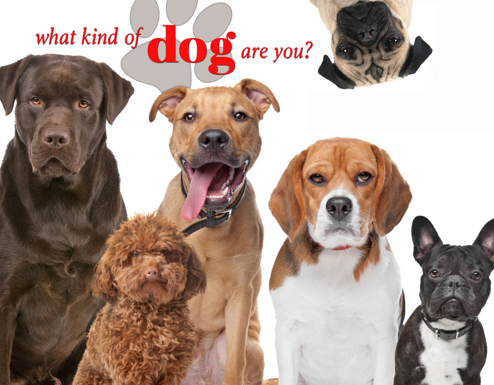 Quiz which dog breed is right for me breed dogs for Types of dogs with photos