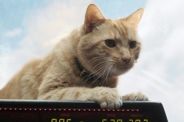 Goose The Cat Steals The Show In 'Captain Marvel'