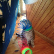 This cat who underestimated a Slinky