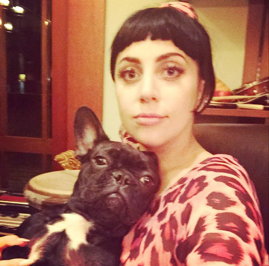 Lady Gaga cuddled with her pup.