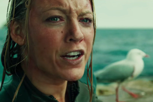 The Breakout Star from 'The Shallows' Is a Seagull Named Steven