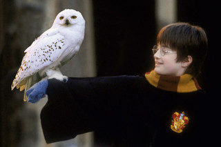 Which 'Harry Potter' Animal Are You?
