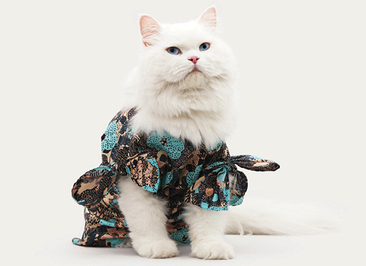 Is Your Cat Supermodel Material? United Bamboo is Casting for its 2014 Cat Calendar!