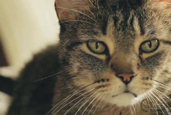 Mid-Afternoon Video Interstitial: Be Careful When Ordering From This CAT-alogue