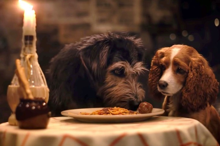 Disney S New Lady And The Tramp Is Better Than The Original Zimbio