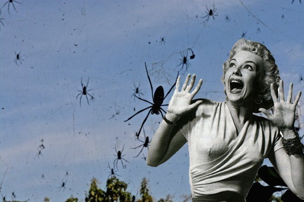 Sign of the Impending Apocalypse: It's Raining Spiders in Australia