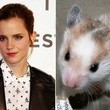 Emma Watson's hamster may have had the coolest coffin in hamster history.