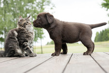 Can We Guess If You Are a Dog or Cat Person?