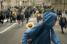 You Will Not Believe the Amount of Dogs in 'White God'