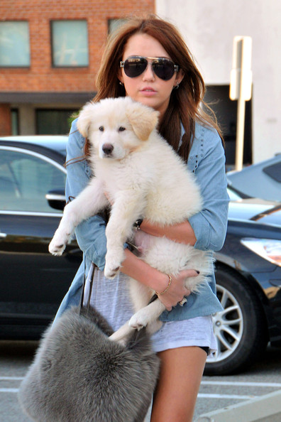 Miley Cyrus holds onto her fluffy white puppy while doing a bit of shopping in West Hollywood. Miley was wearing a pair of short shorts, leather boots and was carrying a furry purse to which matched her dog.