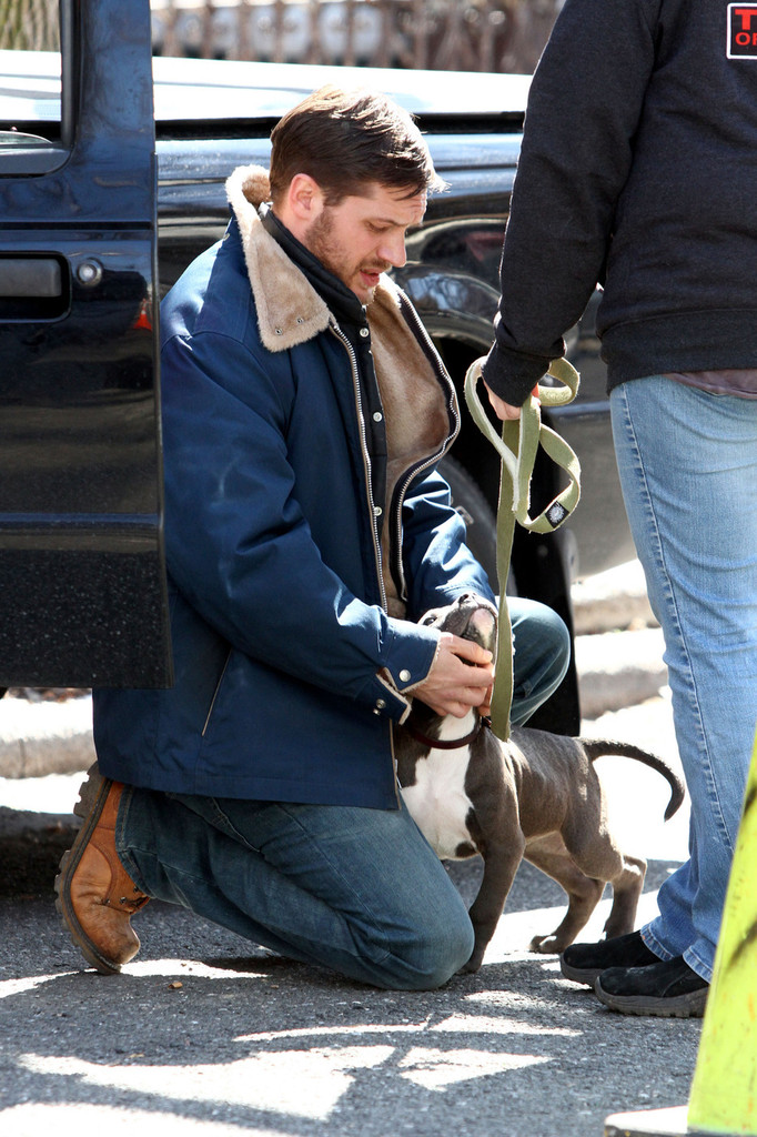 http://www1.pictures.zimbio.com/pc/Tom+Hardy+Animal+Rescue+Films+Brooklyn+P5Fb5MqQJHzx.jpg