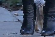 Amber Heard Ankle Boots